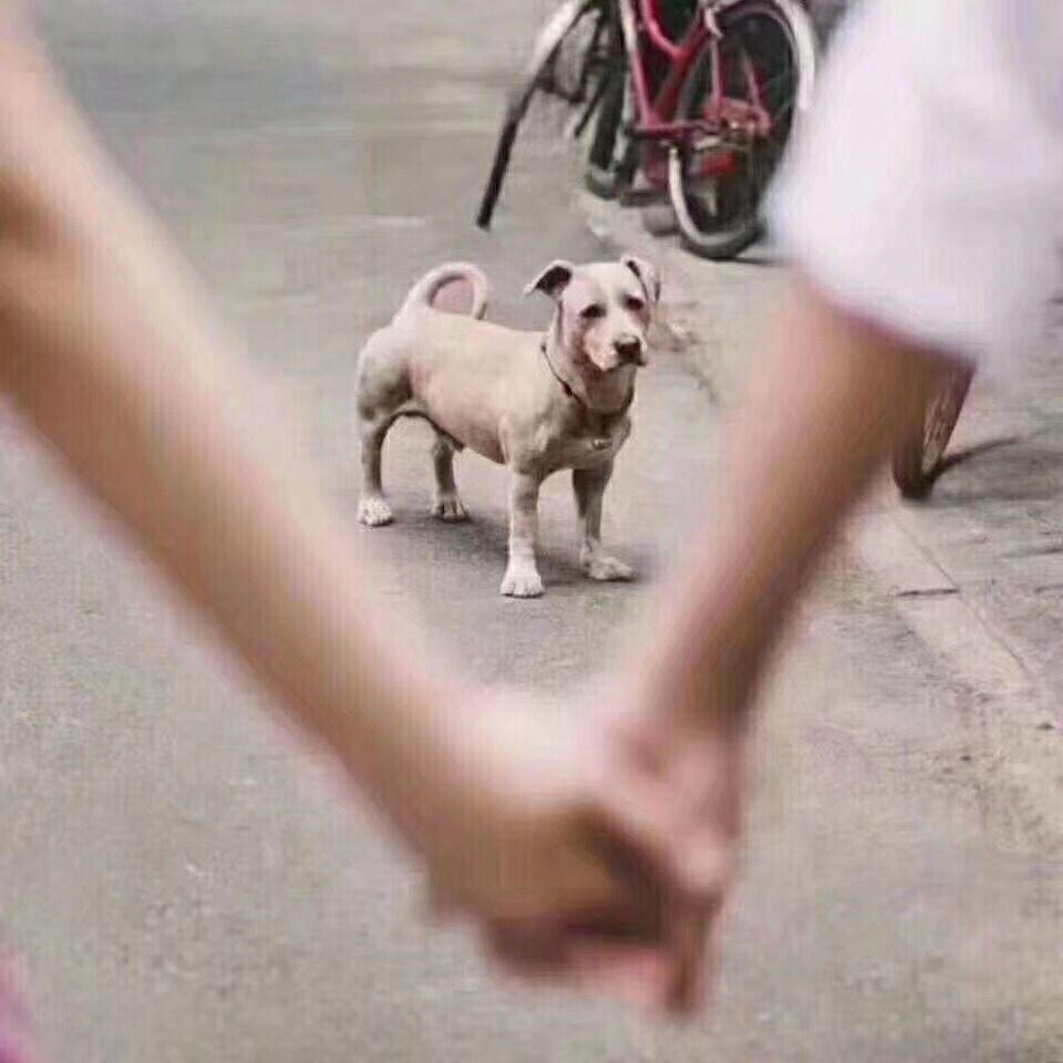 520单身狗